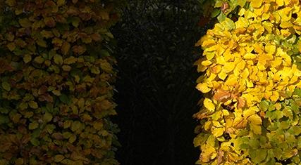Warme Gelbtöne deuten auf einen milden Herbsttag hin.